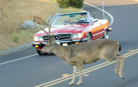 Student hits deer, reminding drivers to be cautious on the road