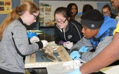 Peers enjoy learning about sharks