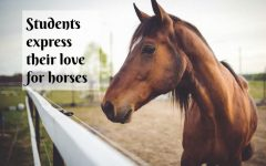 Taylor, Williams, McNew share their love for horses