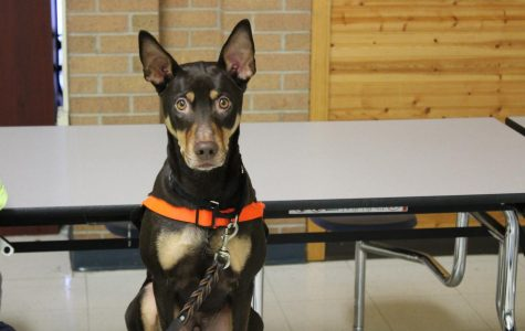 Canine rescue visits Fisher's classroom