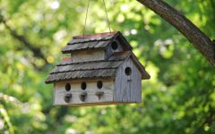 'Bird Box' leaves viewers in suspense