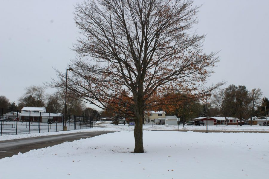 Snow+covers+the+bare+branches+of+a+KHS+tree.+Students+enjoyed+a+snow+day+Tuesday%2C+Nov.+12.